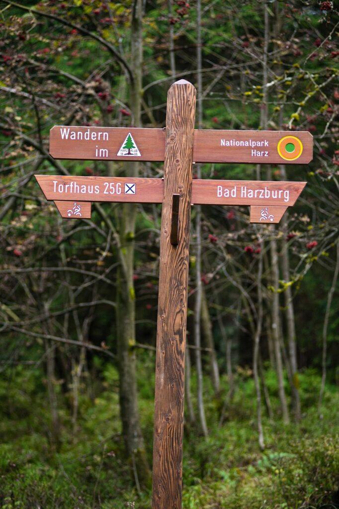 Schilderwald im Naturschutzgebiet Harz