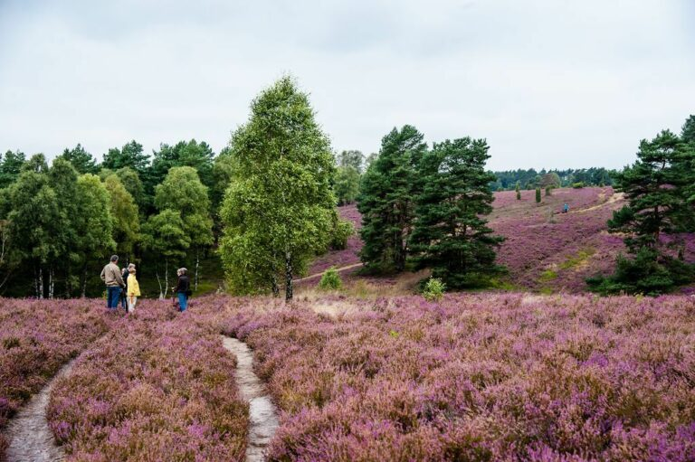 Ein beliebtes Naturschutzgebiet in Niedersachsen ist die Heide