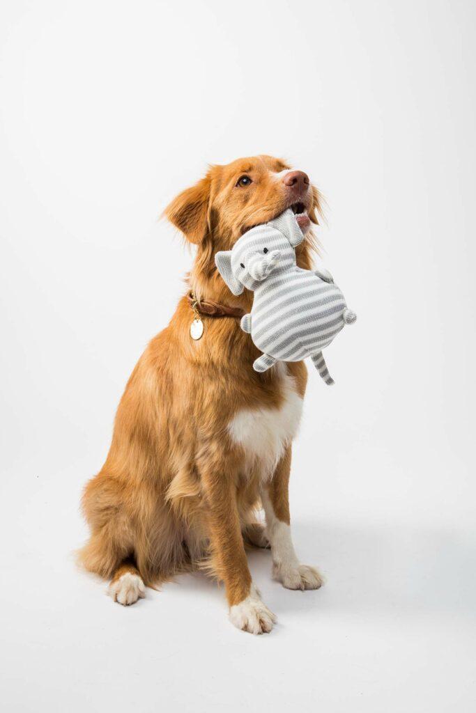 Hund mit Babyspielzeug