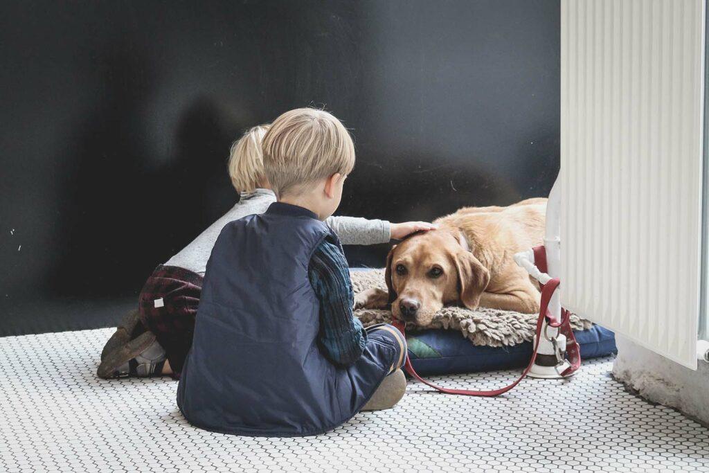 Hund an Kinder gewoehnen