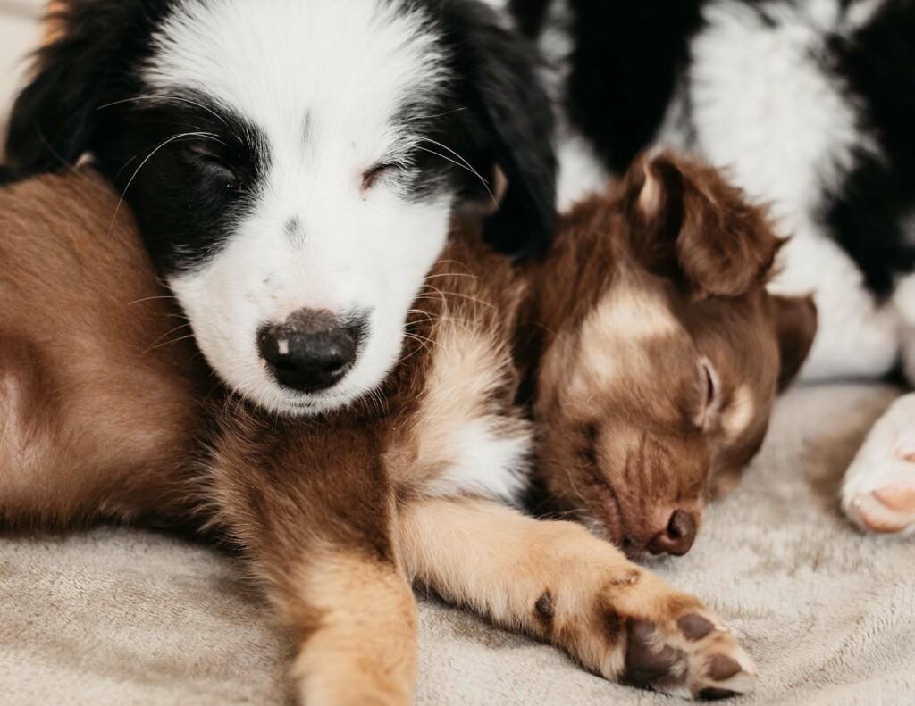 Zwei Hunde kuscheln miteinander