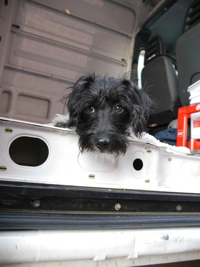 Fiby ist der Hund der beiden Vanlifer
