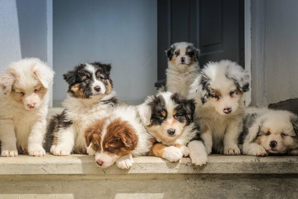 Mehrere Hunde die man adoptieren kann
