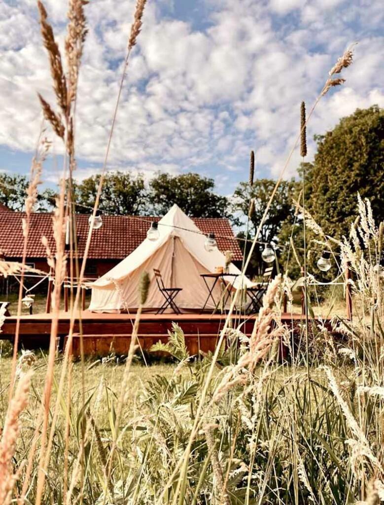 Blick auf ein Zelt durch hohe Graeser
