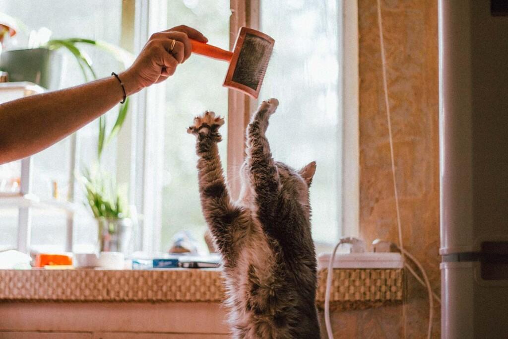 Katze spielt mit ihrer Haarbuerste