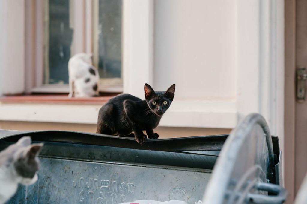 kleine schwarze Katze schaut neugierig umher